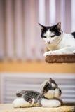 Kot siedzi na żółtym tle Zdjęcie Stock