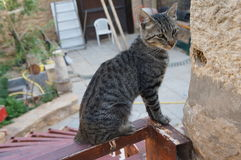 Kot siedzi na dachu obraz stock
