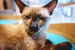 Kot siedzi na kanapy łóżku Obraz Stock