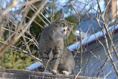 Kot siedzi na ogrodzeniu i ogląda blisko Fotografia Royalty Free