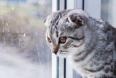 Kot siedzi na patrzeć i windowsill Zdjęcie Stock