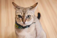 Kot siedzi na podłoga Zdjęcie Royalty Free