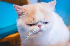 Kot siedzi na podłoga Obraz Stock