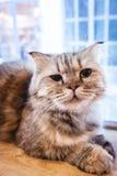 Kot siedzi na podłoga Obrazy Royalty Free