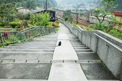 Kot siedzi na schodkach Obraz Royalty Free
