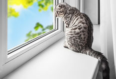 Kot siedzi na windowsill Zdjęcie Royalty Free