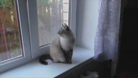 kot siedzi na windowsill i patrzeje out okno zdjęcie wideo