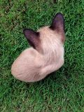 Kot siedzi odgórnego widok Obrazy Stock