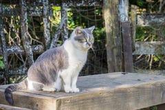 Kot siedzi outdoors, na ławce fotografia royalty free