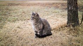 Kot siedzi puszek z zimną pogodą Obraz Stock