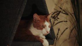 Kot siedzi w domu zbiory