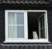 Kot siedzi w otwartym okno Obrazy Stock