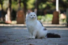 Kot siedzi w parku Zdjęcia Stock
