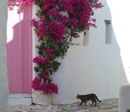 kot skradający się Zdjęcia Stock