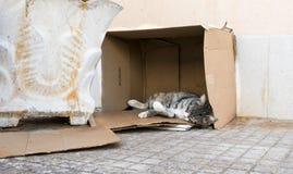 Kot sleaping w kartonie obraz royalty free