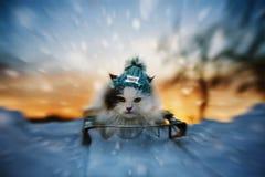 Kot sledding w zimie Obraz Stock