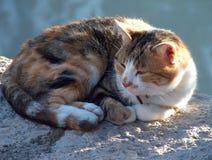 kot spał fotografia stock