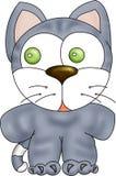 kot szarość Obraz Stock