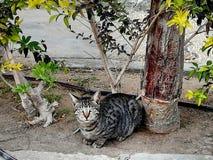 kot szarość zieleni drzewny brąz zdjęcia royalty free