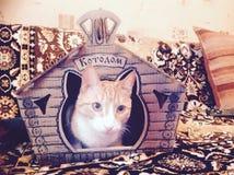 kot szczęśliwa czerwień Fotografia Stock