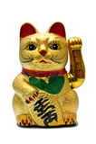 kot szczęsliwy Obrazy Stock