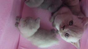 Kot sztuka w zwierzę domowe namiocie zdjęcie wideo
