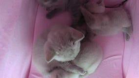 Kot sztuka w zwierzę domowe namiocie zbiory