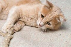 Kot sztuki z arkaną Obrazy Stock