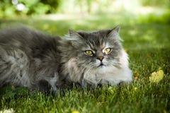kot trawa zieleni Zdjęcie Royalty Free