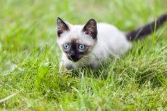 kot trochę Fotografia Royalty Free