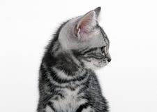 kot trochę Zdjęcia Royalty Free