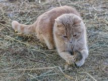 Kot tropi myszy zdjęcia stock