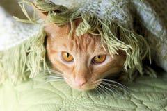Kot tulony w koc Fotografia Royalty Free