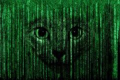Kot twarz w Matrycowym tle ilustracja wektor
