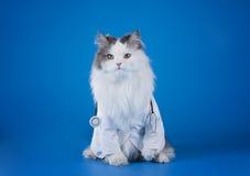 Dr. kot Obrazy Stock