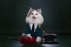 Kot ubierający jak generał Zdjęcie Royalty Free