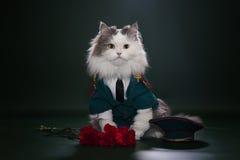 Kot ubierający jak generał Zdjęcia Stock