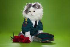 Kot ubierający jak generał Fotografia Royalty Free