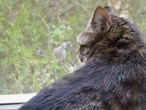 Kot vs Gołąb Fotografia Stock