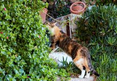 Kot wącha rośliny obrazy royalty free