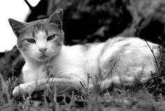 Kot w łące obrazy stock