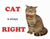 Kot w łęku krawacie siedzi obrazy royalty free