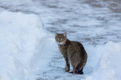 Kot w śniegu zdjęcie stock