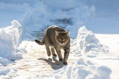 Kot w śniegu obraz stock