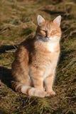 Kot w świetle słonecznym Zdjęcia Royalty Free
