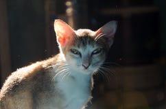 Kot w świetle słonecznym Zdjęcia Stock