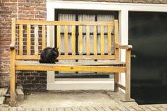 Kot w ławce amsterdam Obrazy Stock