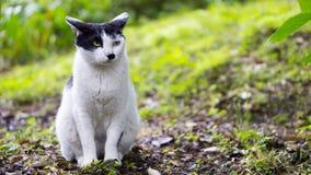 Kot w czarny i biały, oglądający las Fotografia Stock