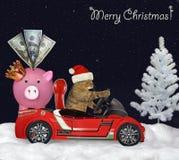 Kot w czerwonym samochodzie w noc lesie obraz royalty free