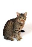kot w domu zdjęcie stock
